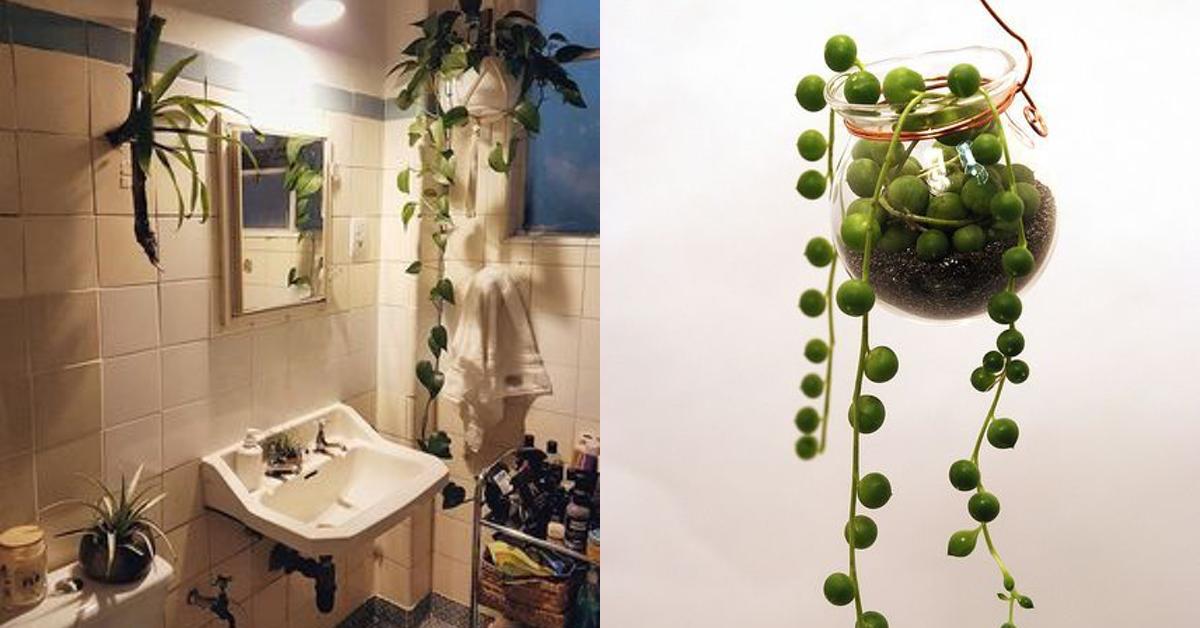 Idee per il bagno 12 piante che non hanno bisogno di luce - Piante per il bagno ...