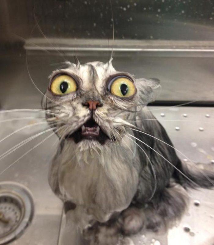 Gatto bagnato e spaventato