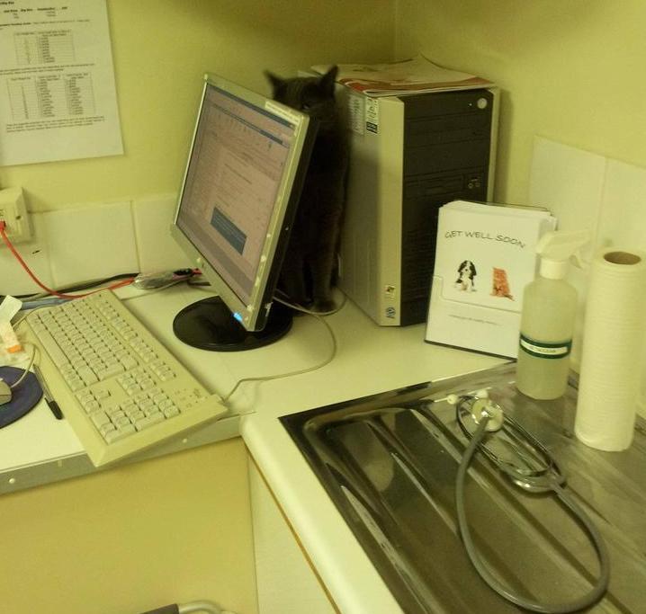 Gatto nascosto dietro a un PC