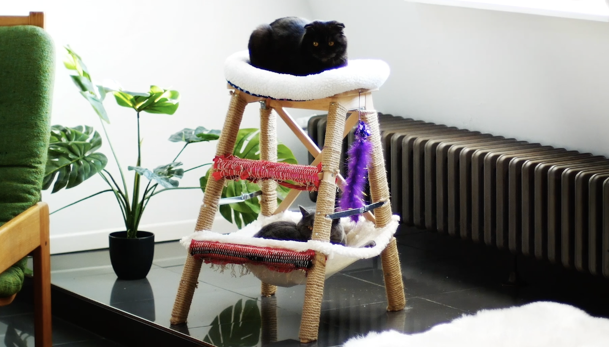 Idee creative per gatti