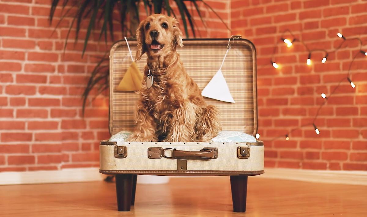 Cuccia per cani con valigia trolley