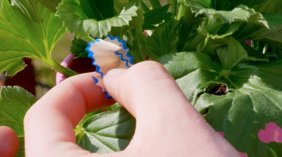Tempera di matita sulle foglie di una pianta