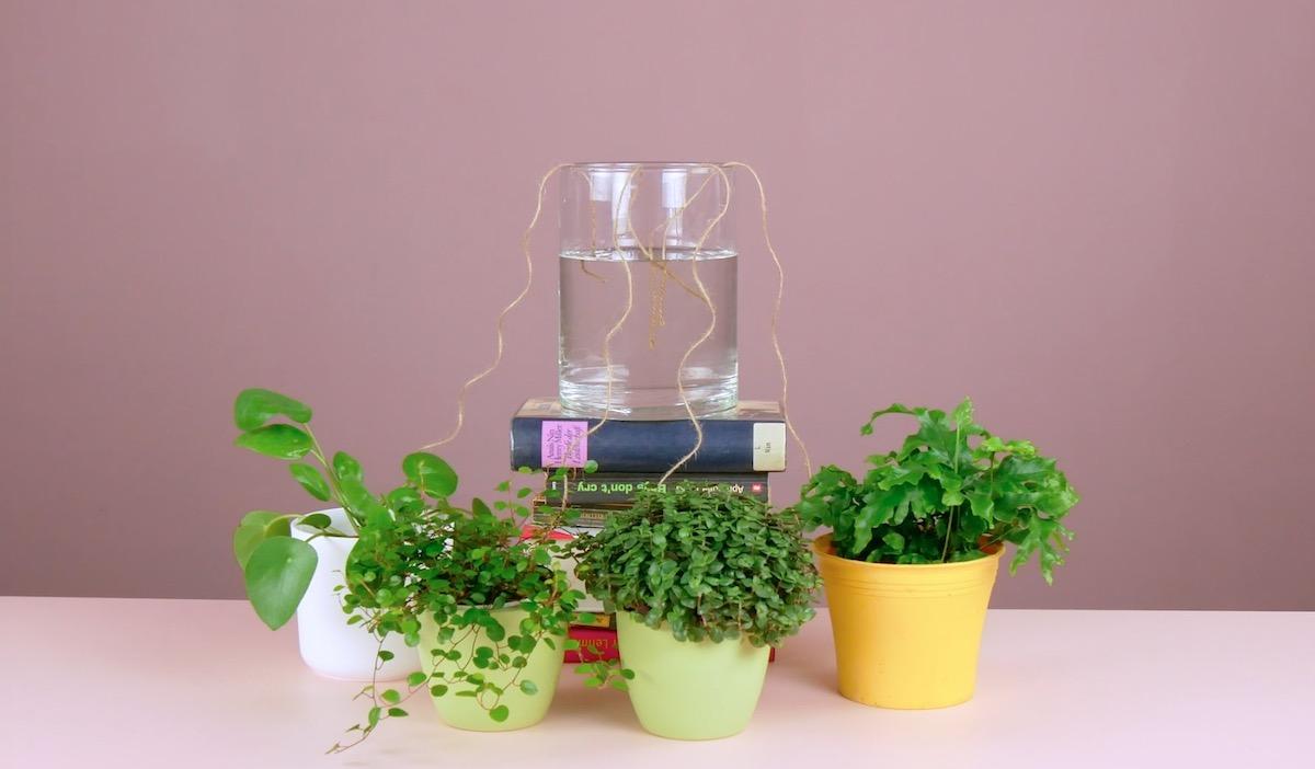 Irrigazione delle piante in vaso